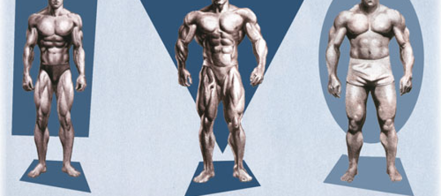 Tipos de corpo: Ectomorfo, Mesomorfo e Endomorfo