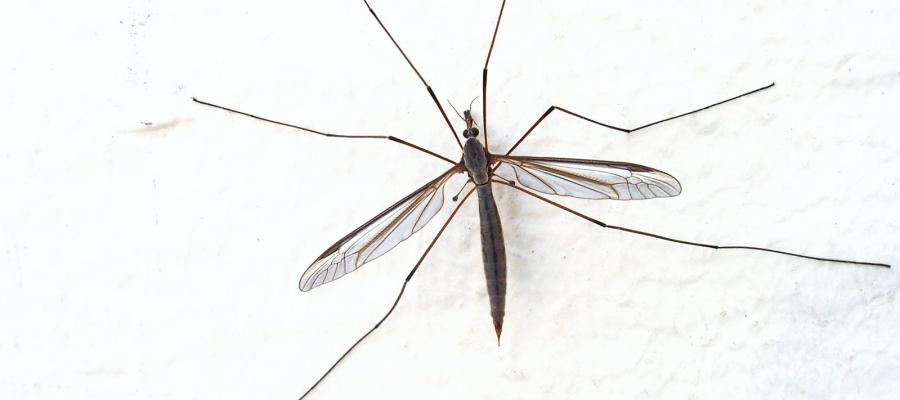 Encontro com mosquitos