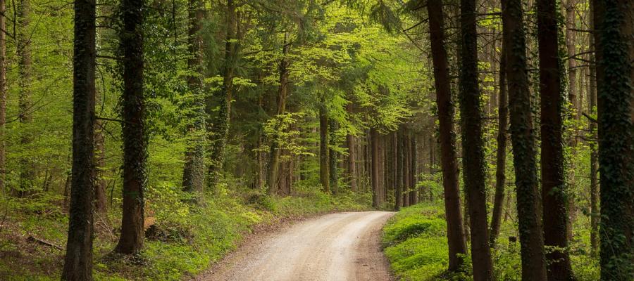Hipotermia – Comportamento de trilha